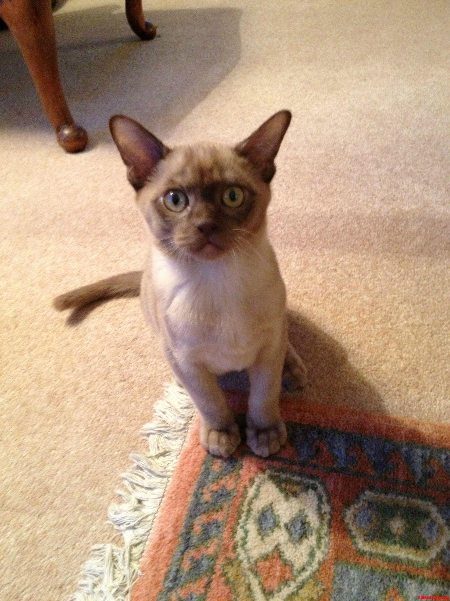 My Grandads Cat Henry.