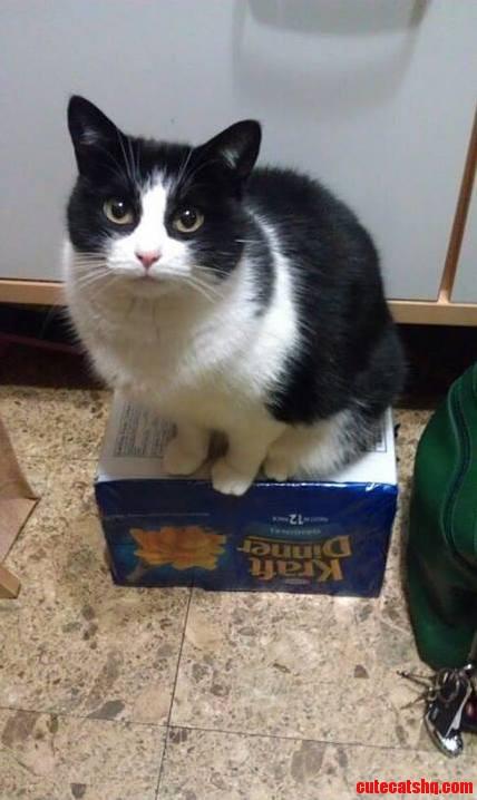 My Kraft Dinner Now Belongs To My Cat