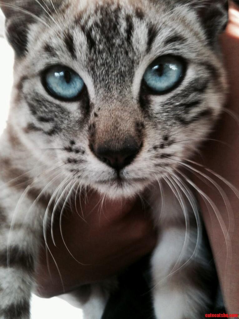 My Neighbors Photogenic Cat.