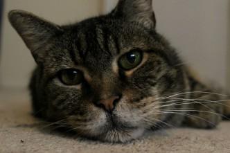 My Senior Kitty