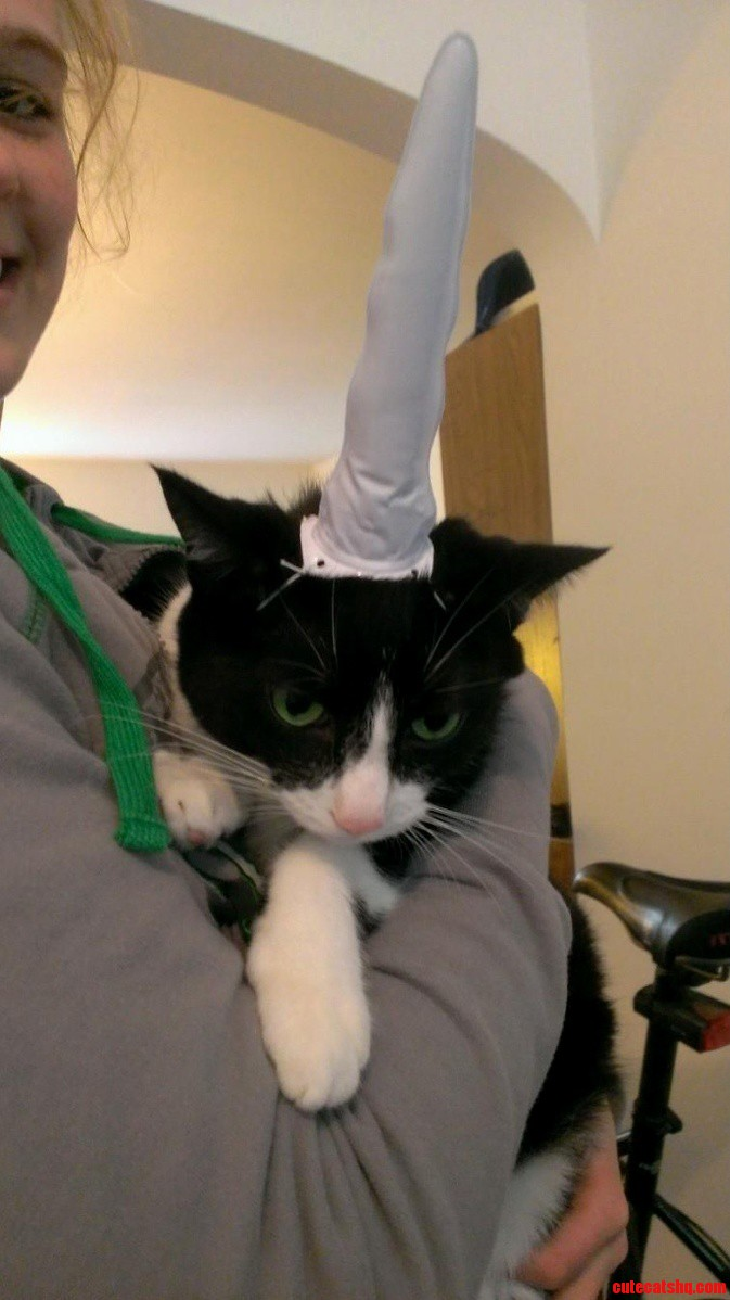 My Sister Sent Me This. I Present Unicorn Cat.