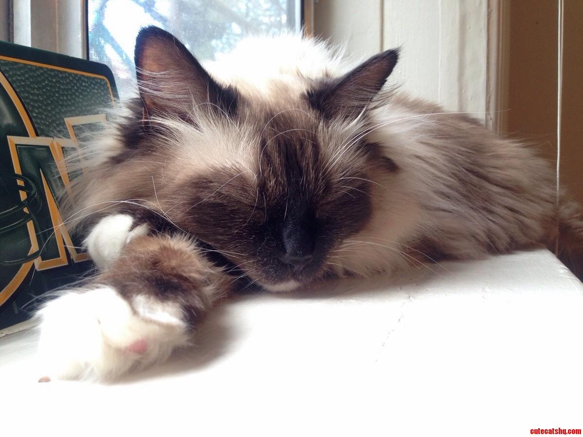 My Sleepy Snowshoe