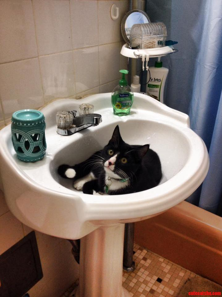My Tuxedo Tripod Lounging In The Sink.