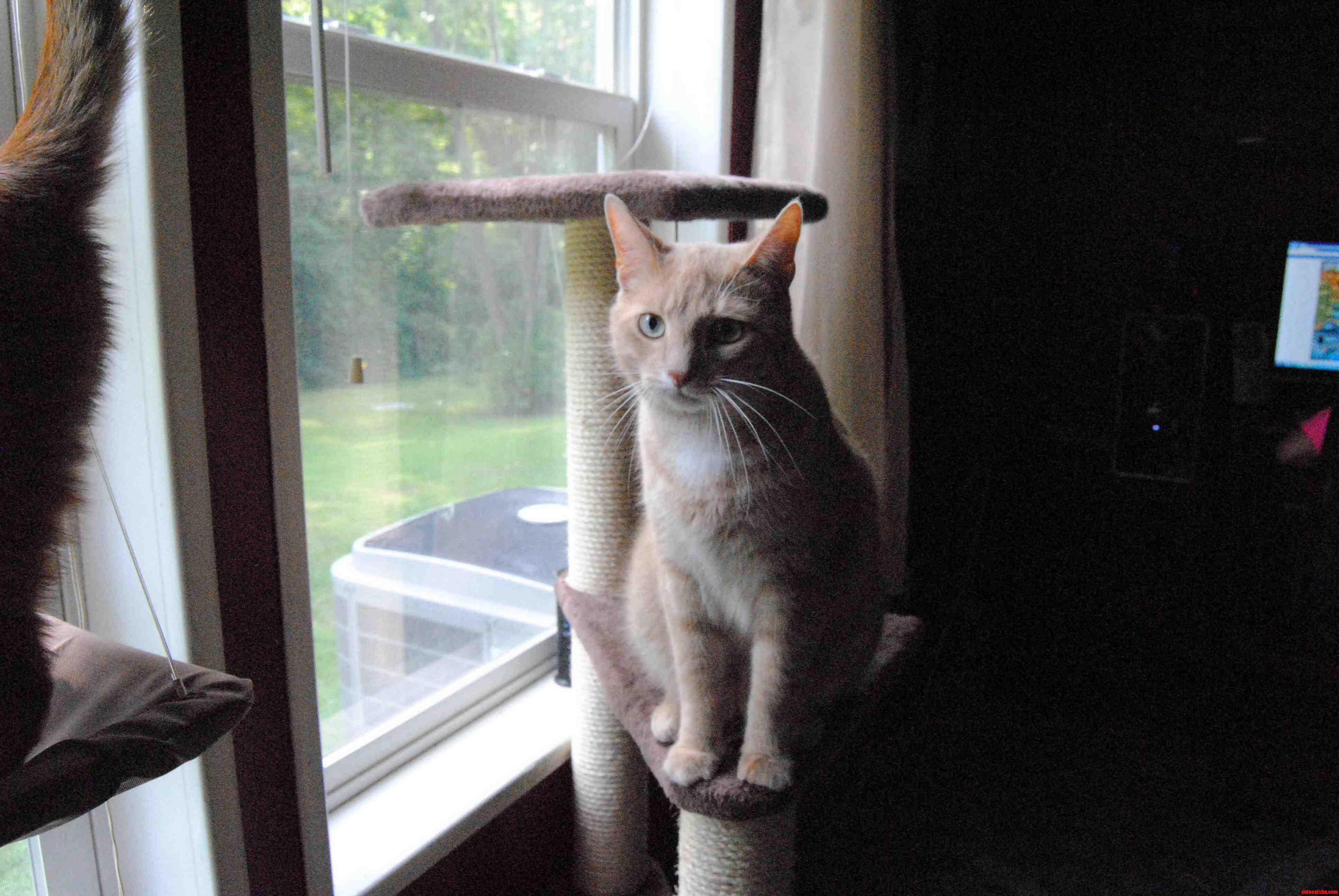 My Very Photogenic Cat Boogie