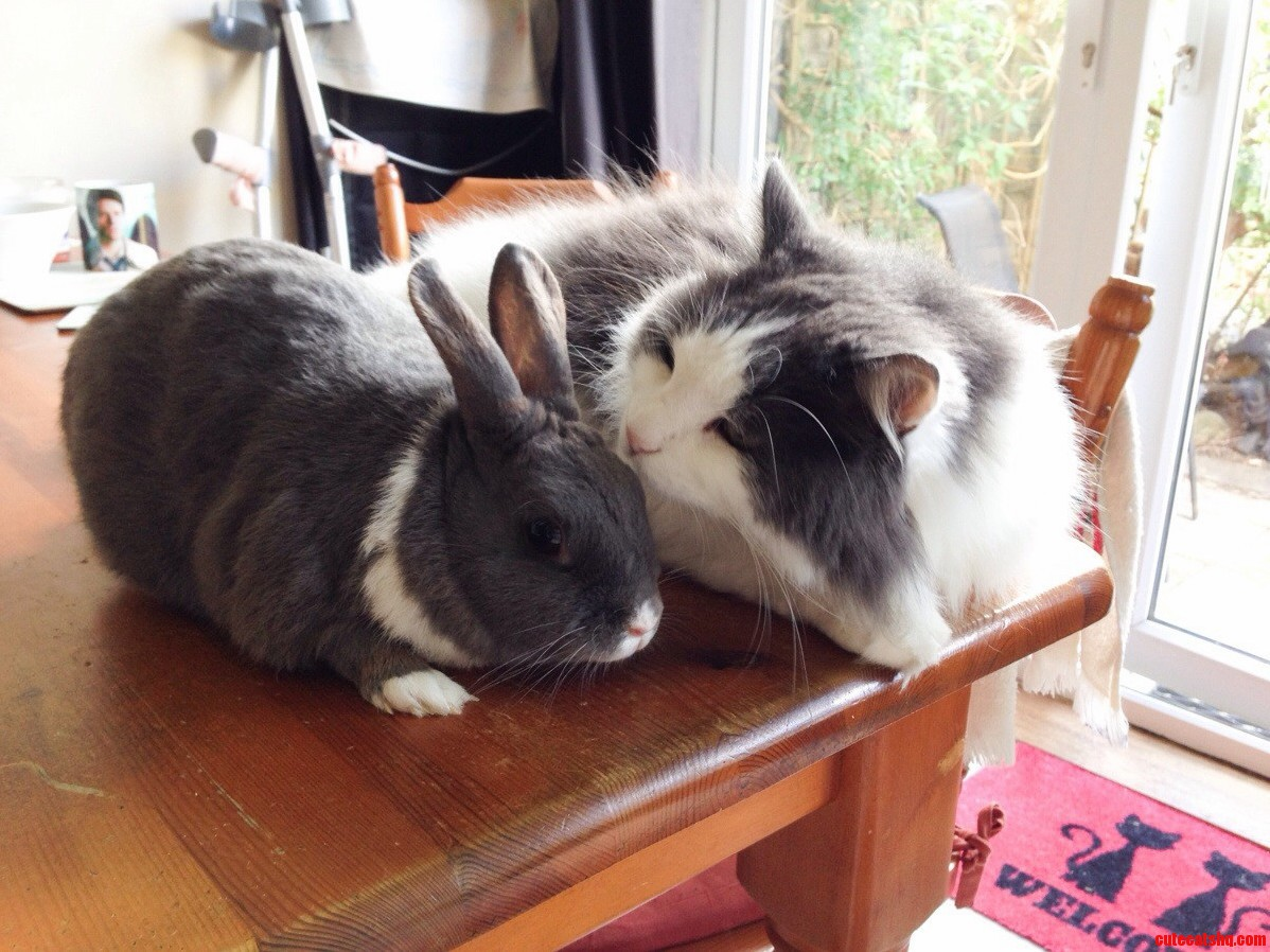 Ollie The Cat And Baby Boo The Rabbit Love To Chill Together.