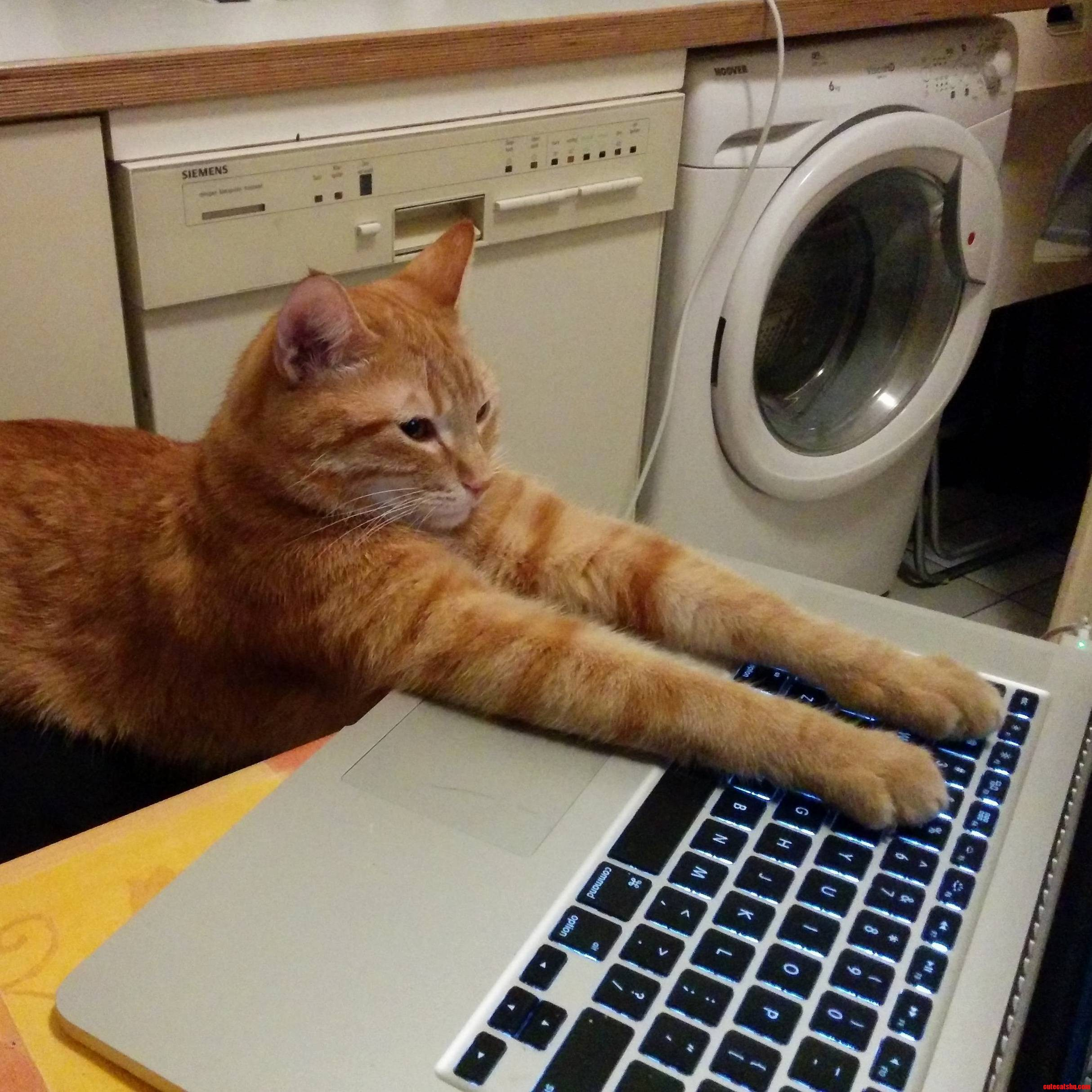 On The Internet Nobody Knows Youre A Cat.