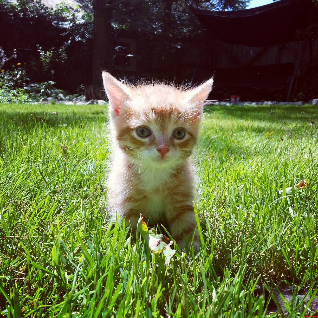 Pancakes In The Grass. One Of The Earliest Pictures Of My Paraplegic Kitty