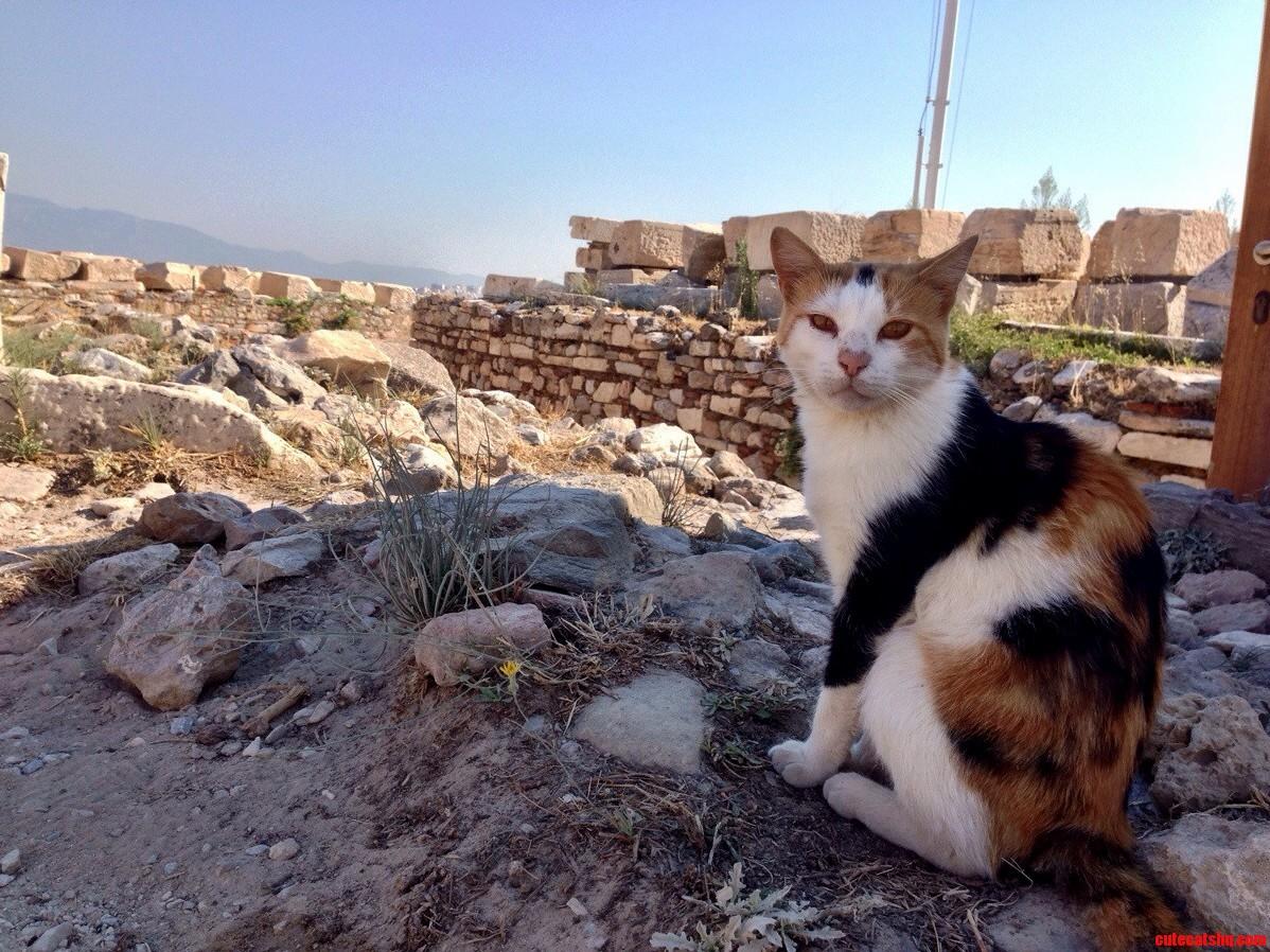 Parthenon Kitty