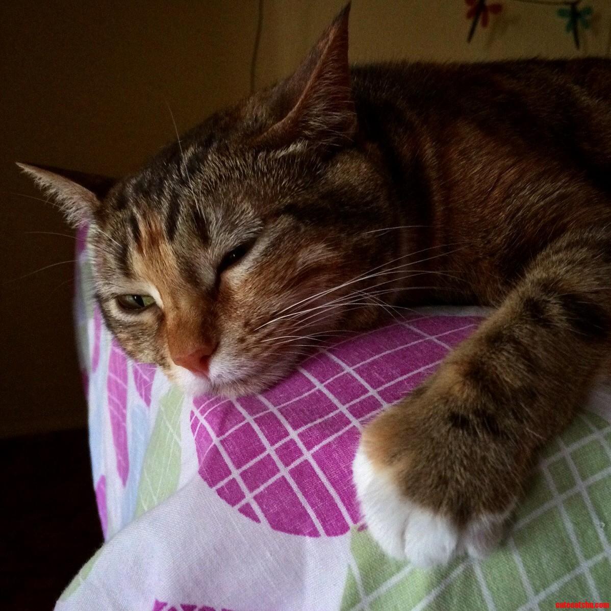 Sakura Hates Mondays As Much As Humans Do.