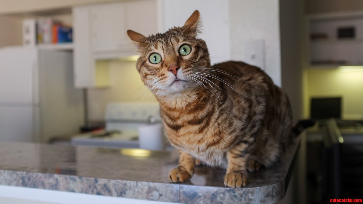 So I See Cat Eyes Are A Theme Today. Heres My Contribution. Behold The Magnificent Derpcat.
