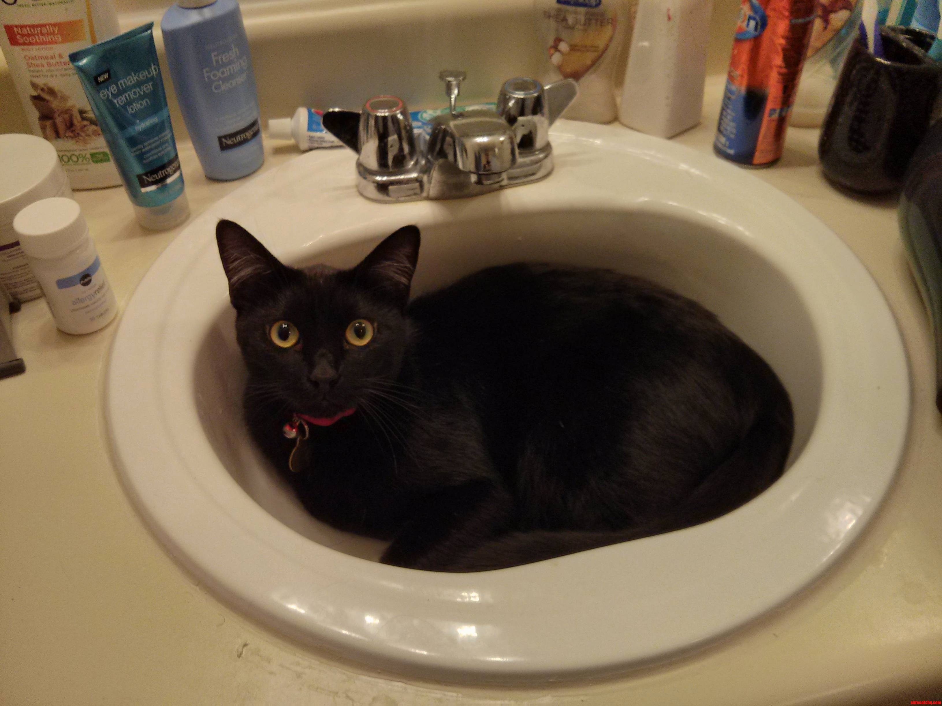 So Were Doing Cats In Sinks Now Okay Meet Sam