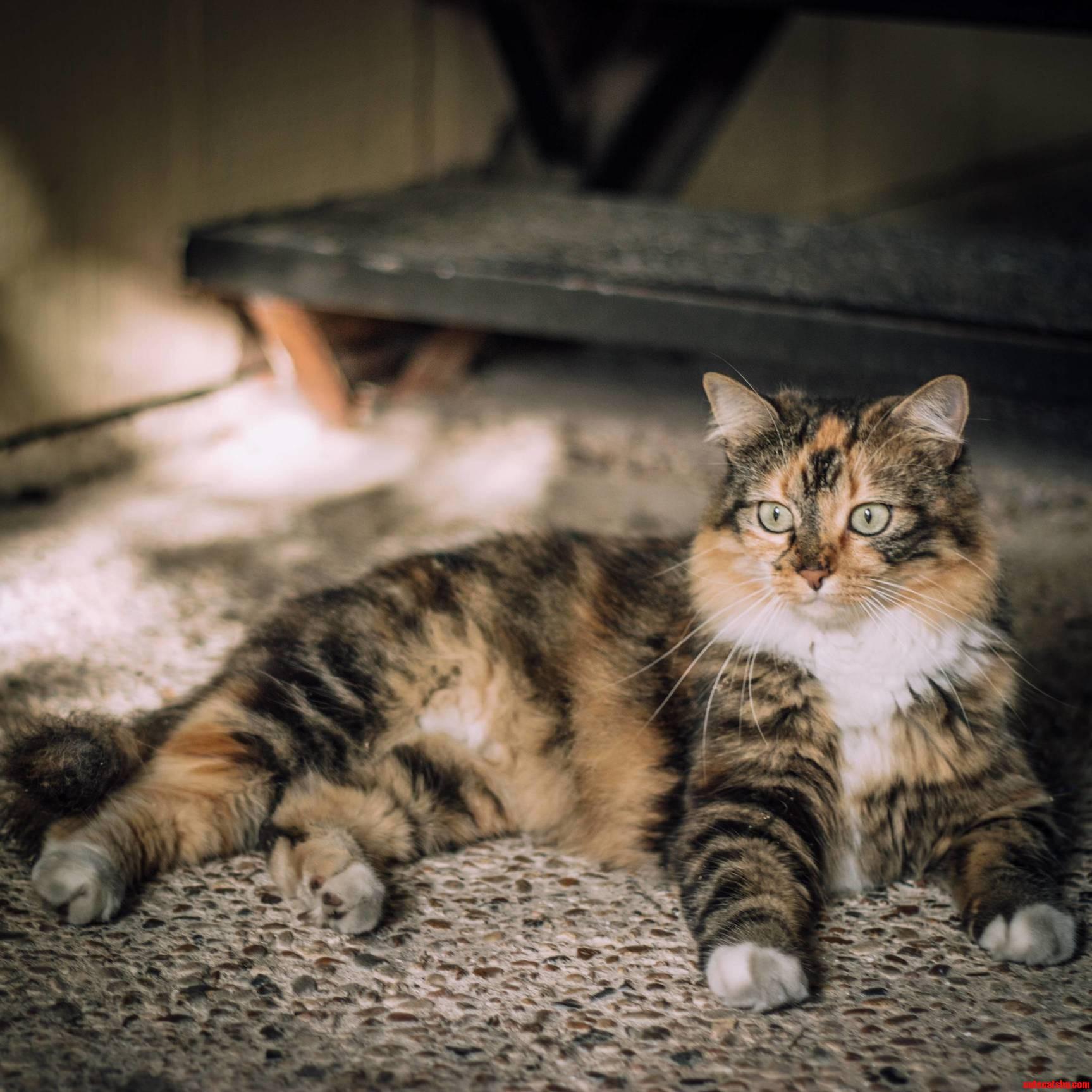The Neighborhood Kitty…She Likes To Roll Around