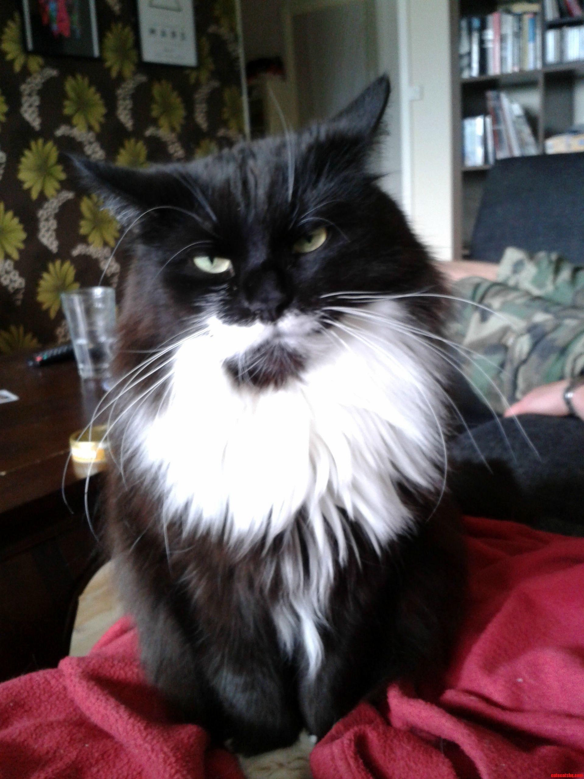 This Cat Has A Great Beard