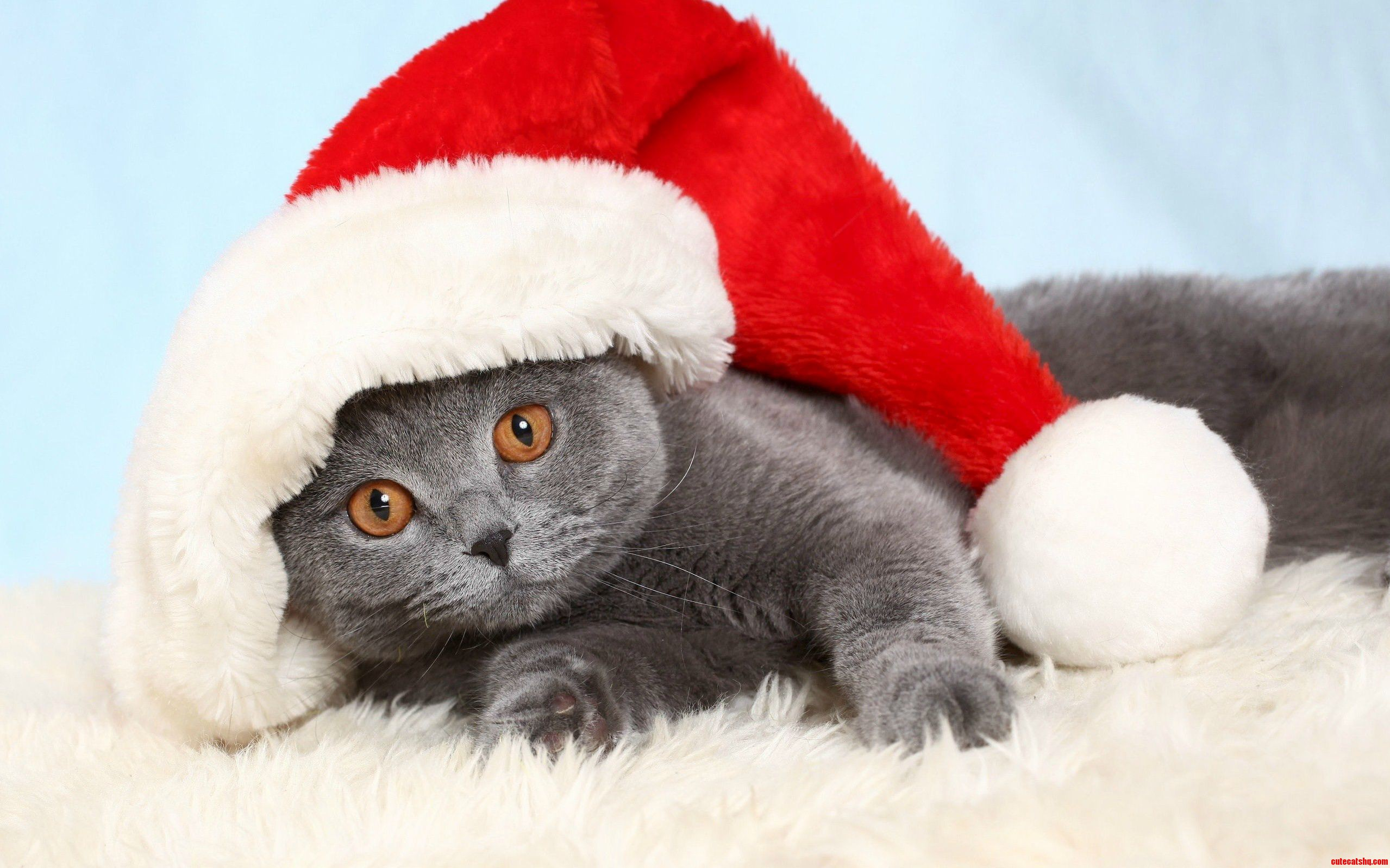 This Year Santa Will Be A Cat
