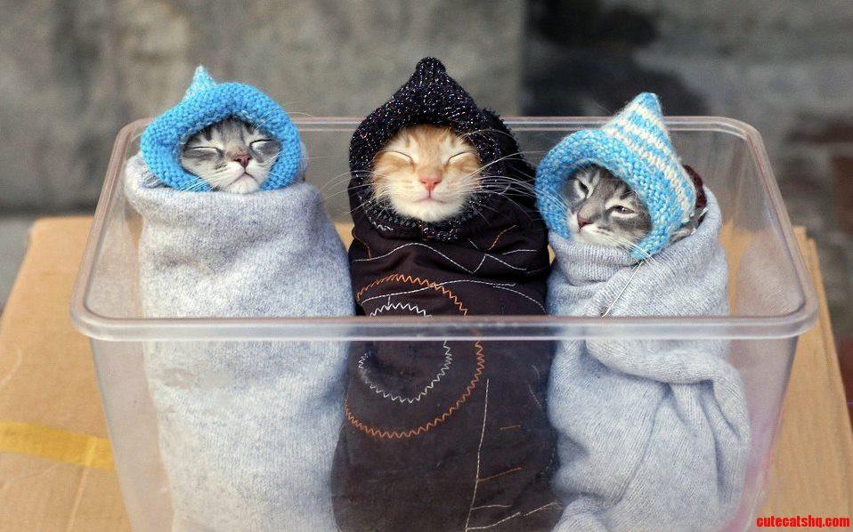 Three Cuties…