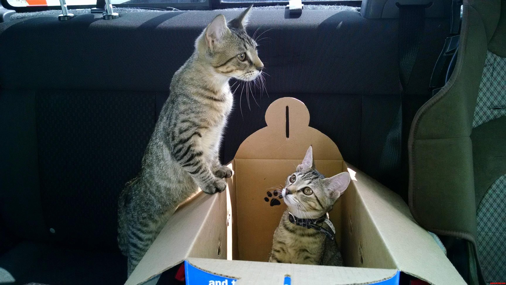 Went To Buy Our First Cat And Ended Up Getting Two