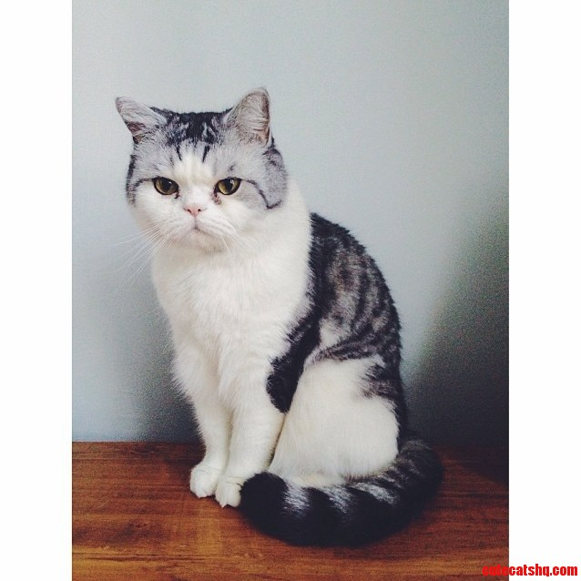 Any Idea What Cat Breed This Is. I Think Its Adorable.