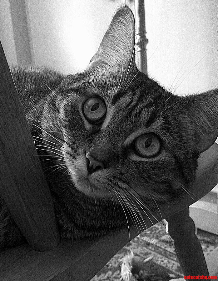 Caturday. My Princess Dottie.