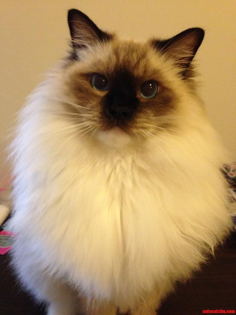Cute Fatty Cat