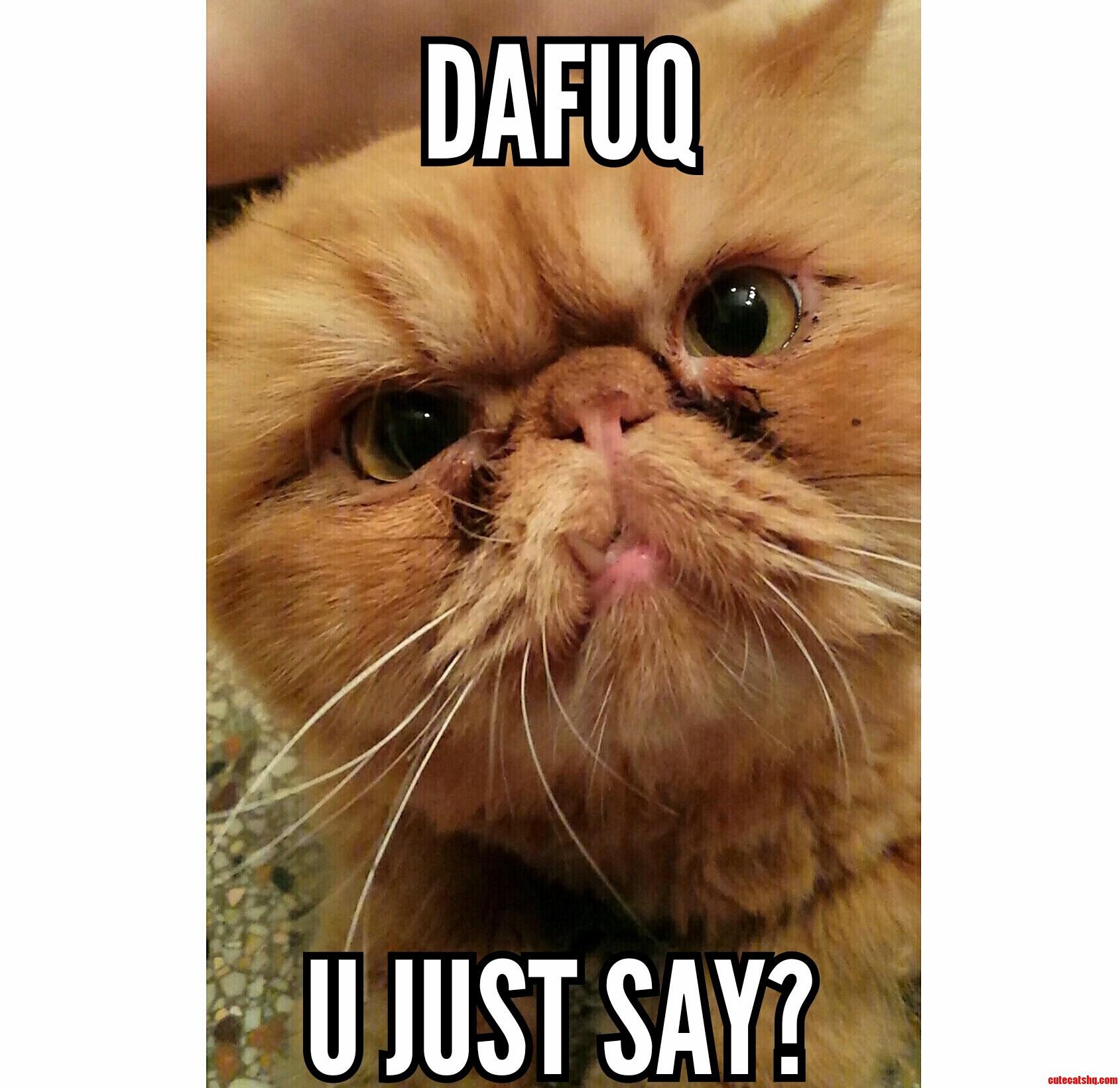 Dafuq Cat