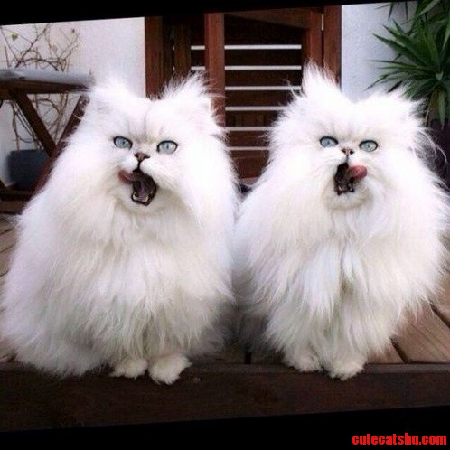 Double The Fluff