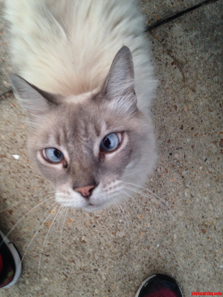 I Also Have A Cross-Eyed Cat This Is Fuzzybutt