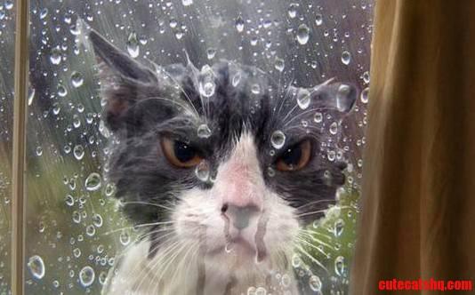 I Dont Like Rain