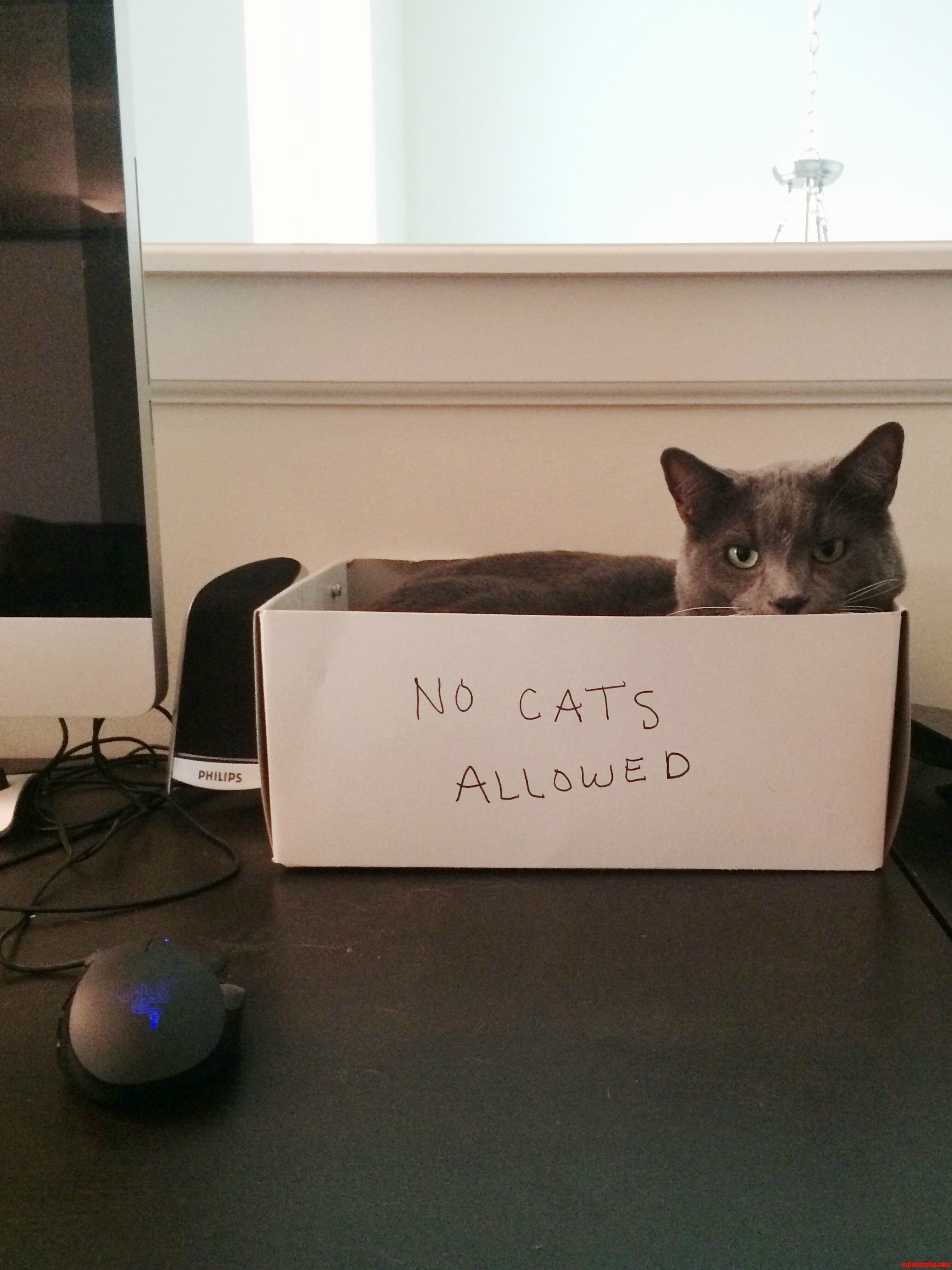 If At First The Cat-Trap Is Unsuccessful Add A Descriptive Label To The Trap