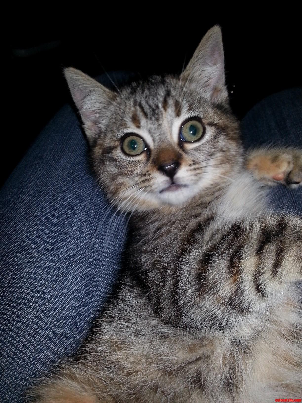 Igor My Kitten With A Lazy Eye