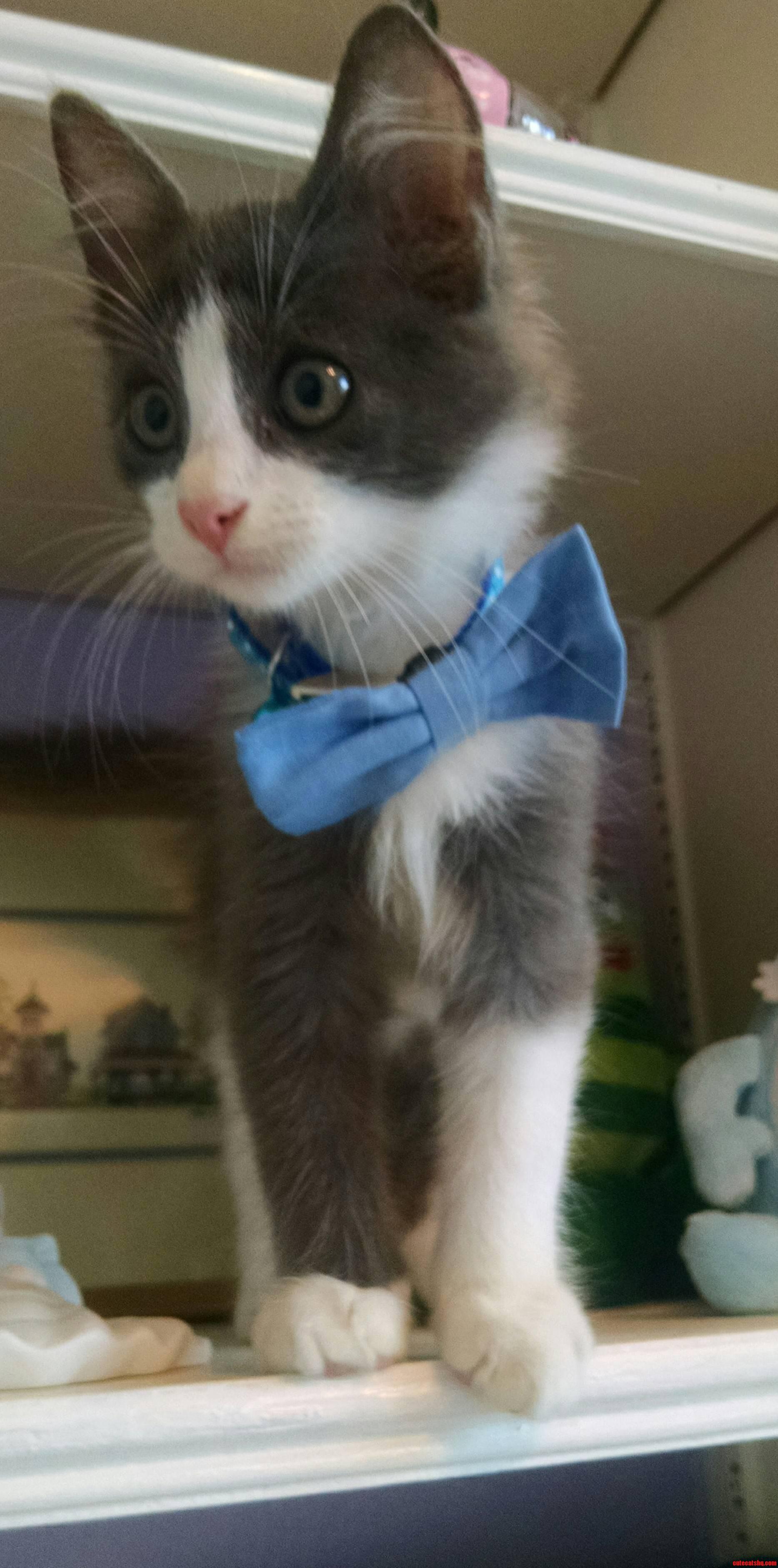 Kitten Thor In A Bowtie