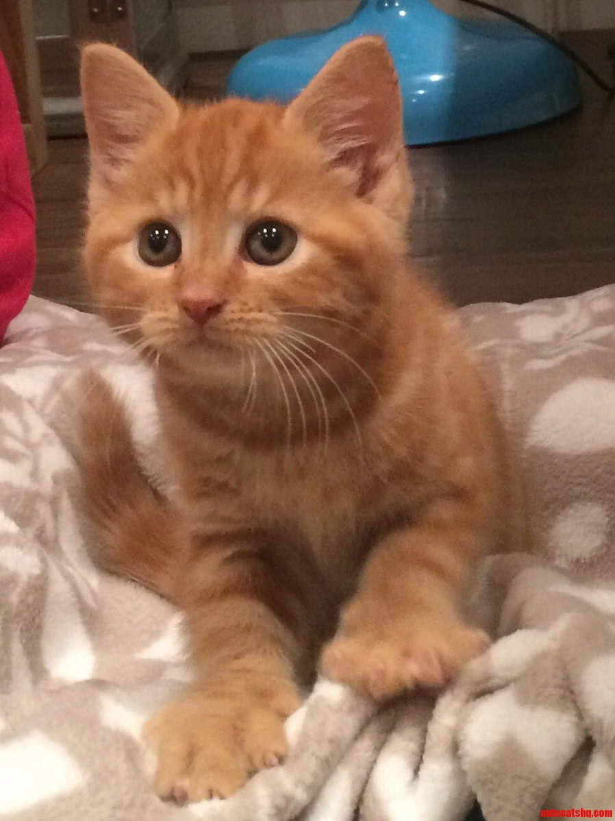 Meet Webster.