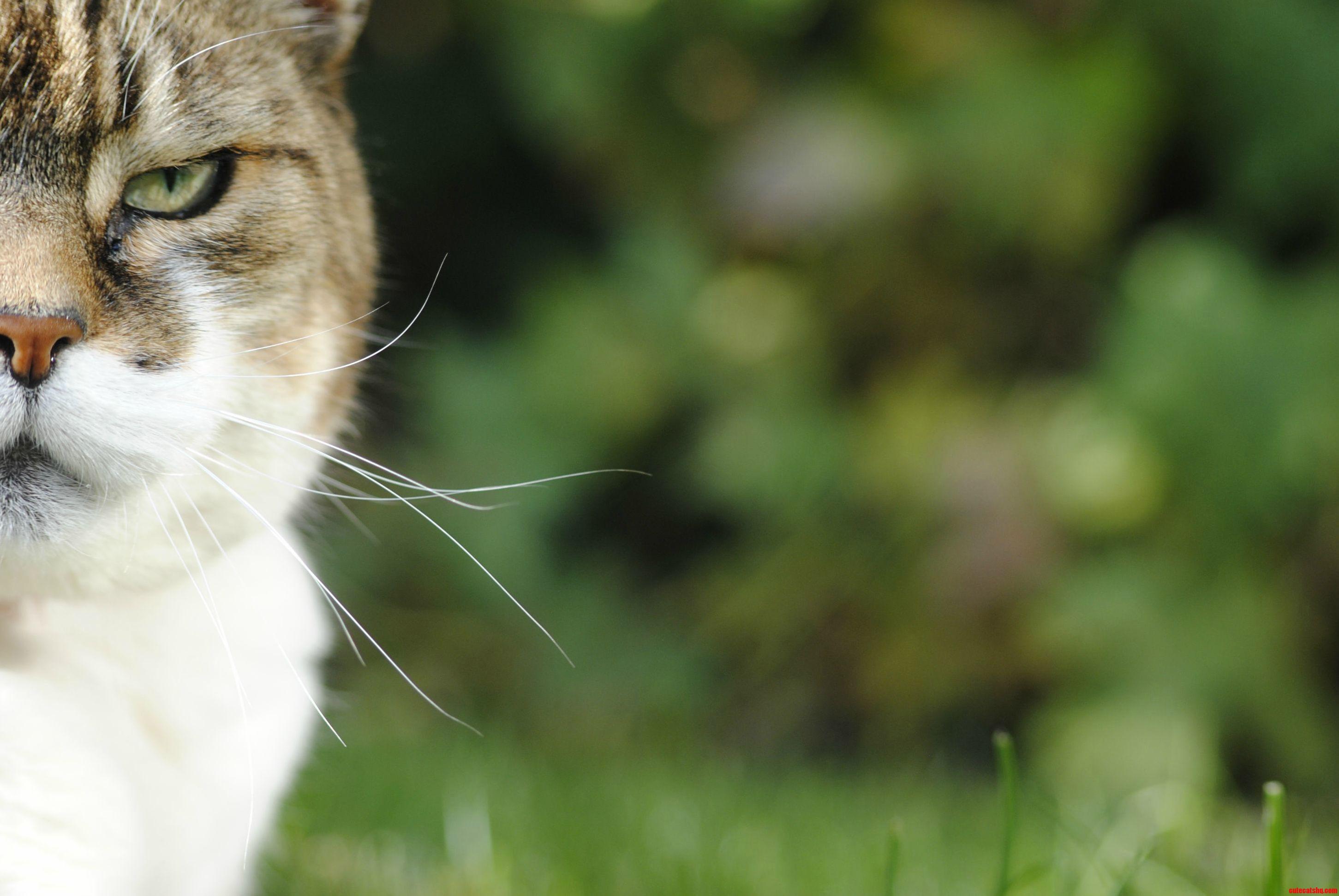 My Eldest Cat Was Quite The Grumpy One.
