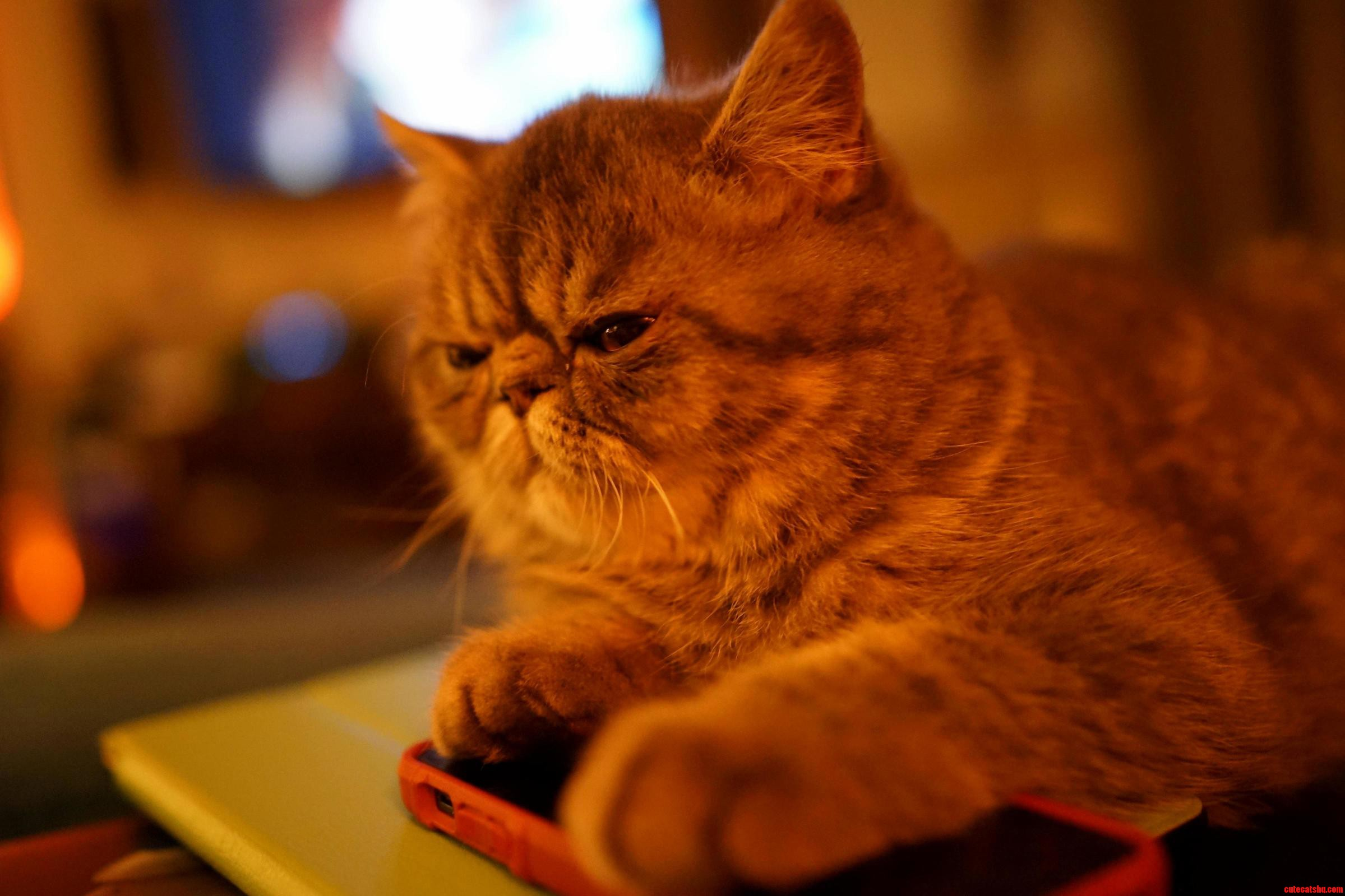 My Kitten Penelope Hates Technology And Looks Like Wilford Brimley