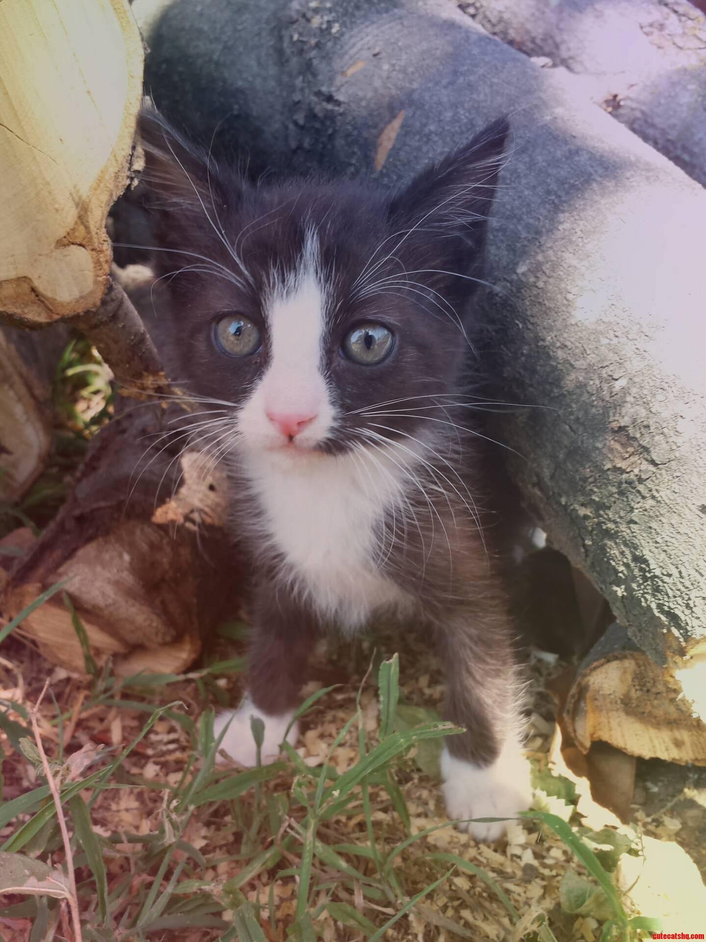 My New Rescue Kitten.