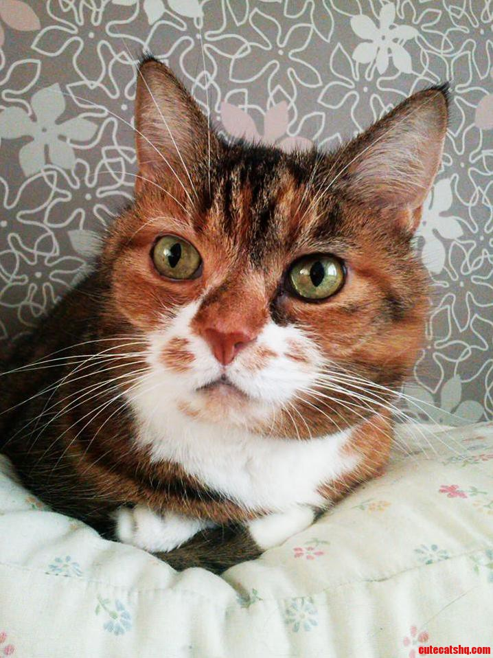 My Sleepbuddy M. She Guards My Sleep On A Pillow Next To My Head.