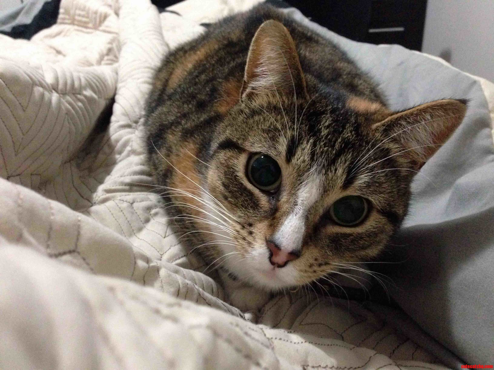 My So Has A Cute Cat.