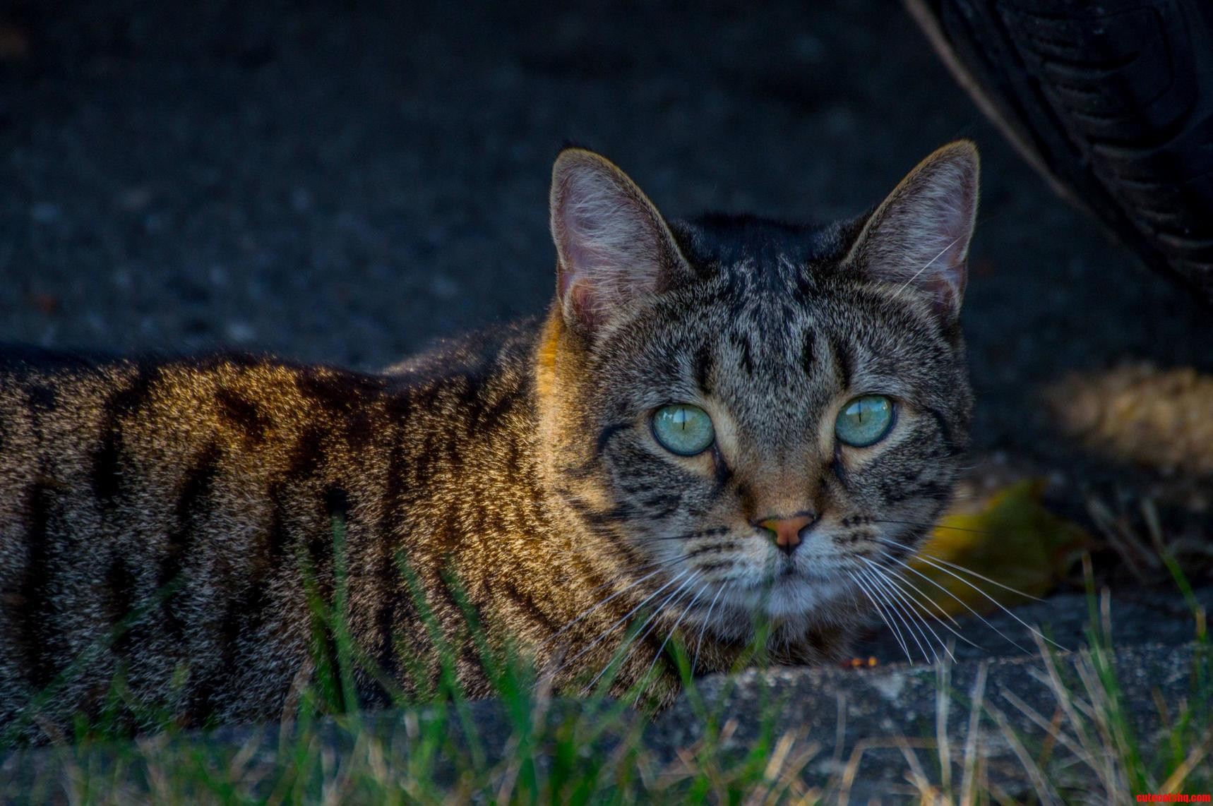 Neighborhood Cat That Teases Me As It Passes Through My Yard…