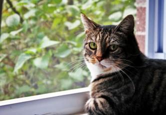 Ribby Kitty