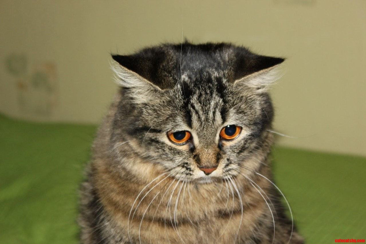 Free Pictures Of Sad Cats