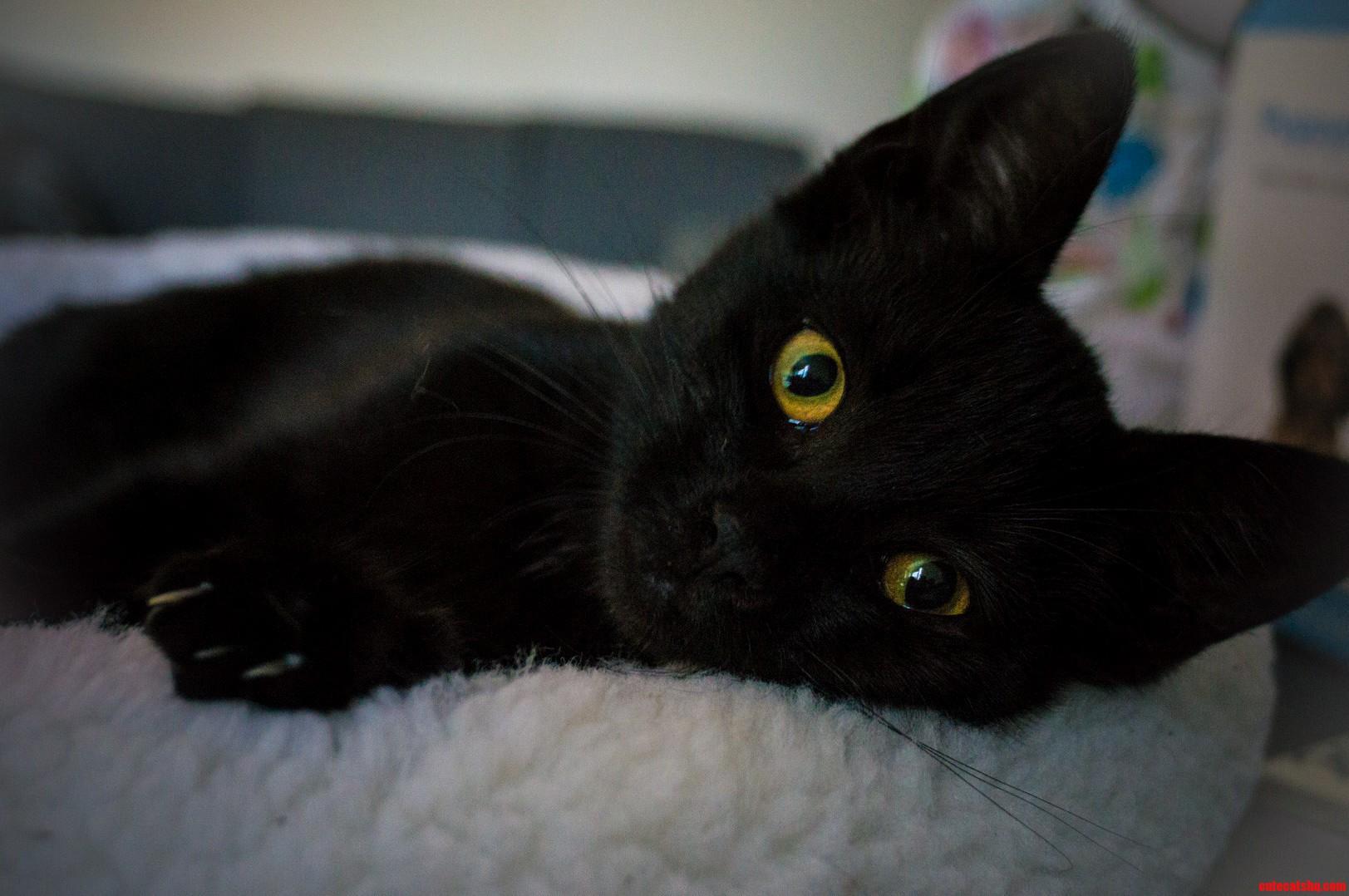 Saved A Kitten My First Kitten Ever. Rcats Got Any Tips For A Newbie