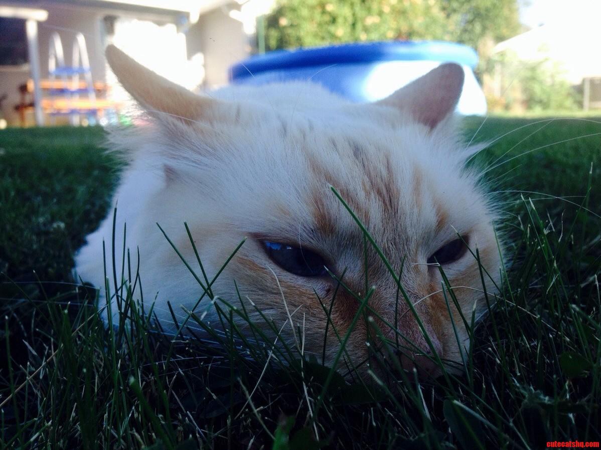 This Is My Cat Uzi. I Just Like Him.
