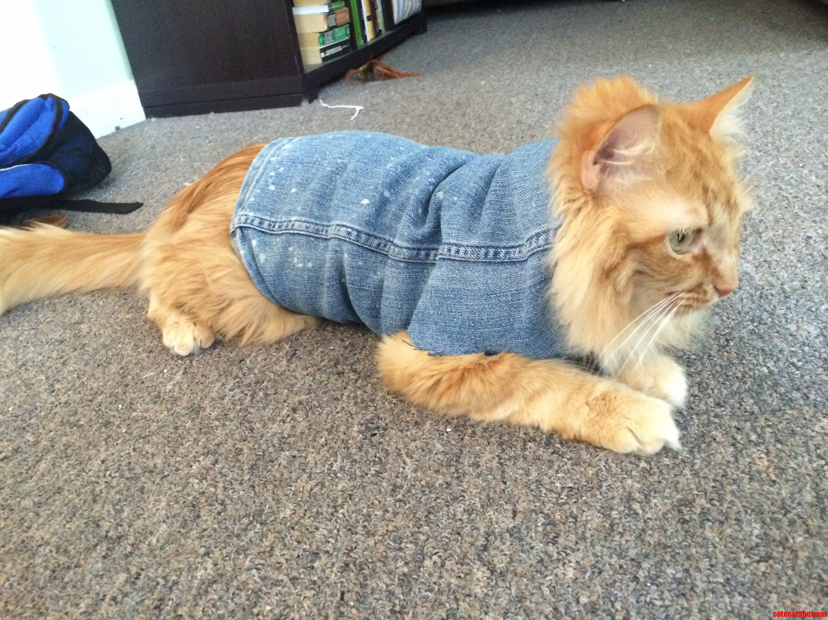 This Is What Happens When I Turn Old Jeans Into Cutoffs- Instant Jean Jacket For Murray