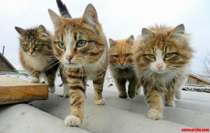 This is my Gang