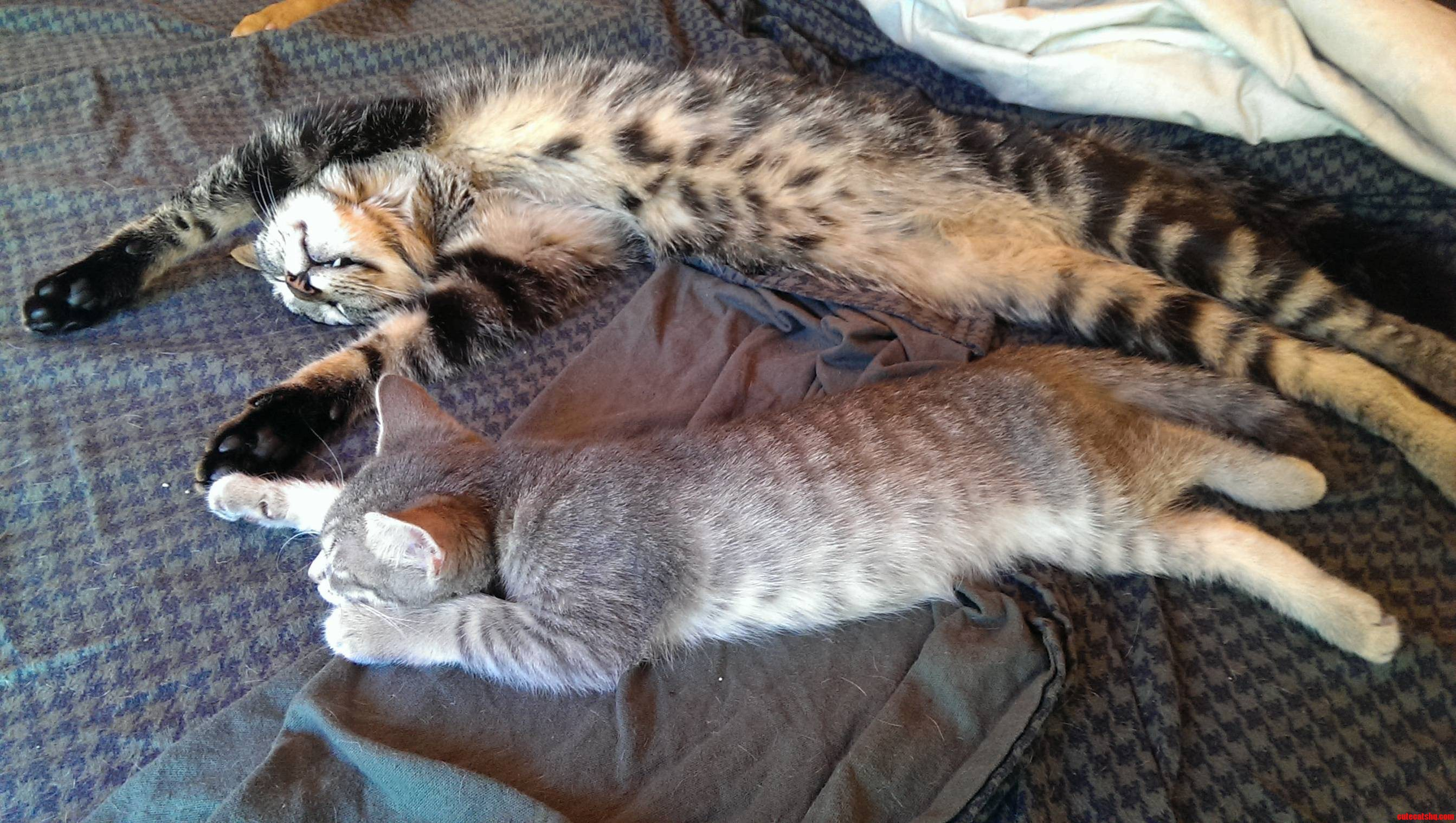Two Cats In A Serious Afternoon Nap