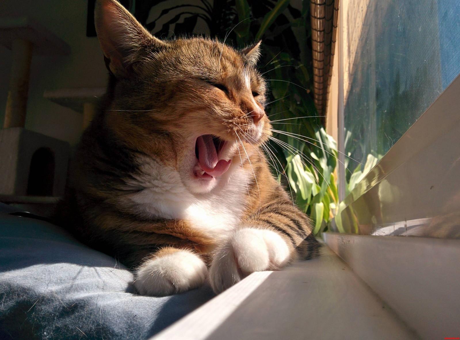 Yawns Look Like Yells