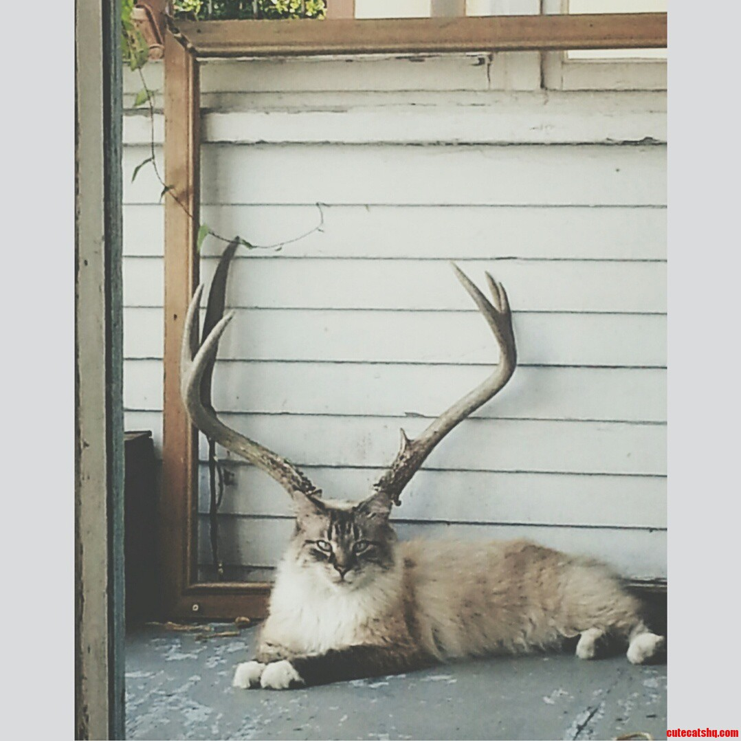 Cat lined up perfectly with deer antlers
