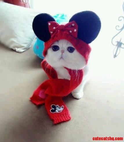 Cute Minnie Mouse Cat