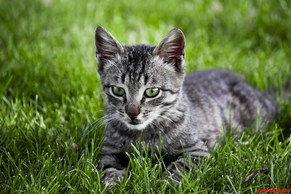 Handsome cat