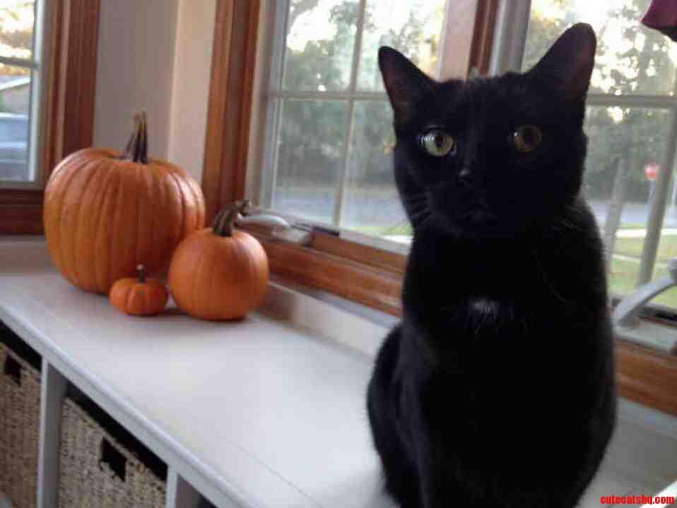 Having a black cat makes halloween more fun.