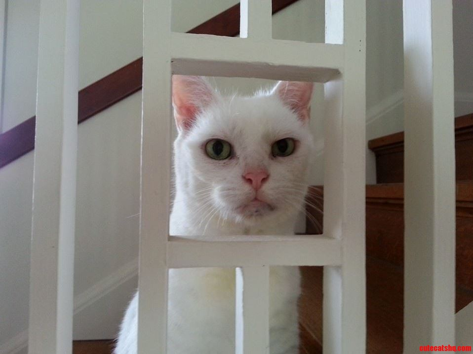 nebraska humane society cats